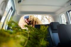 Albero di Natale di carico dell'uomo barbuto nel tronco della sua automobile, dentro la vista I pantaloni a vita bassa mettono l' immagine stock libera da diritti