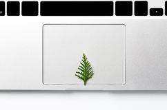 Albero di Natale che cresce da un computer portatile Spazio per il vostro testo Concetto creativo Immagini Stock