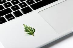 Albero di Natale che cresce da un computer portatile Spazio per il vostro testo Concetto creativo Fotografie Stock Libere da Diritti