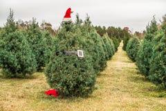 Albero di Natale con il cappello di Santa sull'azienda agricola di Carolina del Sud fotografia stock