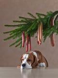 Albero di Natale con le salsiccie ed il cane solo Fotografia Stock Libera da Diritti