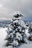 Albero di Natale decorato di natura Immagini Stock