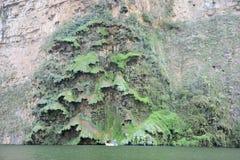 Albero di Natale del canyon di Sumidero Fotografie Stock Libere da Diritti