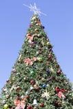 Albero di Natale di Dunedin Immagini Stock Libere da Diritti