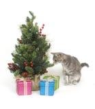 Albero di Natale e del gattino fotografia stock