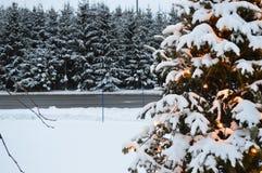 Albero di Natale e luci, abeti e neve immagini stock libere da diritti