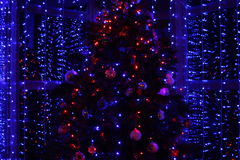 Albero di Natale ed indicatori luminosi Fotografia Stock