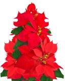 Albero di Natale fatto dei fiori della stella di Natale Fotografie Stock