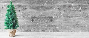 Albero di Natale, Gray Wooden Background, spazio della copia, fiocchi di neve immagine stock