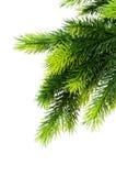 Albero di Natale isolato Fotografia Stock