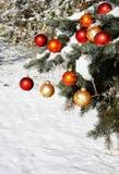 Albero di Natale naturale in neve Fotografia Stock