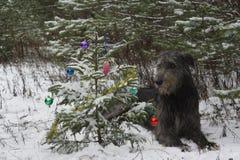 Albero di Natale nella foresta Immagini Stock