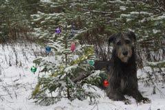 Albero di Natale nella foresta Immagini Stock Libere da Diritti