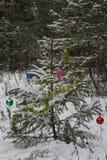 Albero di Natale nella foresta Fotografia Stock