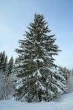 Albero di Natale nella foresta nevosa Fotografia Stock