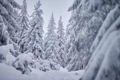 Albero di Natale in neve Fotografia Stock Libera da Diritti