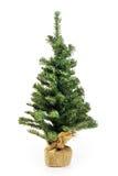 Albero di Natale nudo senza decorazione Fotografie Stock Libere da Diritti