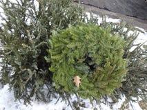 Albero di Natale scartato Immagine Stock Libera da Diritti