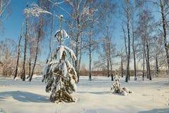 Albero di Natale sotto neve un chiaro giorno Immagini Stock