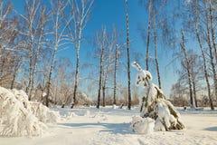Albero di Natale sotto neve un chiaro giorno Fotografia Stock Libera da Diritti