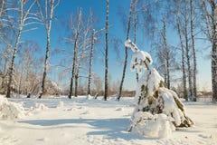 Albero di Natale sotto neve un chiaro giorno Fotografie Stock Libere da Diritti