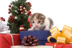 Albero di Natale a strisce del gattino Fotografie Stock Libere da Diritti