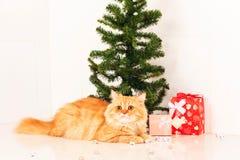 Albero di Natale sveglio e del gatto persiano Fotografia Stock