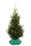Albero di Natale Undecorated nel basamento di plastica verde fotografia stock libera da diritti