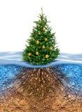 Albero di Natale verde con le radici sotto Fotografia Stock Libera da Diritti