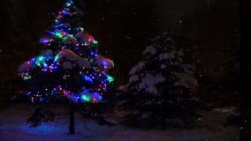 Albero di Natale vivente nella foresta della foresta di inverno con le luci di lampeggio Sta nevicando nella foresta e nelle luci stock footage