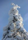 Albero di nevicata Fotografia Stock Libera da Diritti