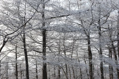 Albero di nevicata nell'inverno Immagine Stock