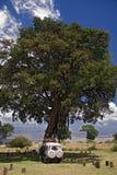 Albero di ngorongoro di paesaggio 015 dell'Africa Fotografie Stock Libere da Diritti