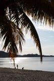 Albero di noce di cocco all'alba sulla spiaggia Immagini Stock Libere da Diritti