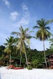 Albero di noce di cocco alla spiaggia Immagini Stock Libere da Diritti