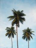 Albero di noce di cocco con cielo blu Fotografie Stock Libere da Diritti