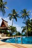 Albero di noce di cocco e della piscina Immagini Stock Libere da Diritti
