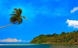 Albero di noce di cocco sopra il mare Immagini Stock