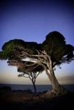 Albero di notte Fotografia Stock Libera da Diritti