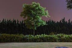 Albero di notte fotografia stock