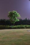 Albero di notte immagine stock libera da diritti