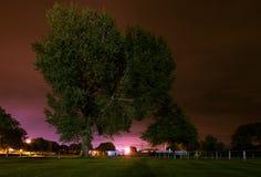 Albero di notte Immagini Stock Libere da Diritti