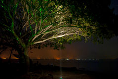Albero di notte vicino all'acqua Fotografia Stock Libera da Diritti