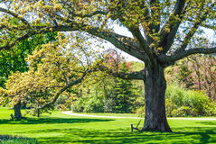 Albero di ombra in parco Immagini Stock