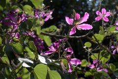Albero di orchidea in fioritura fotografia stock for Orchidea fioritura