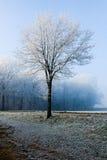Albero di paesaggio di inverno singolo al bordo della foresta immagine stock libera da diritti