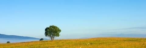 Albero di panorama Fotografia Stock