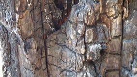 Albero di pino video d archivio