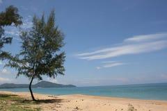Albero di pino al litorale fotografia stock