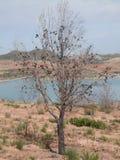 Albero di pino bruciato Fotografie Stock